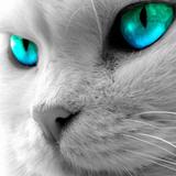 sinilind125 avatar