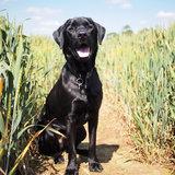 Countrymaster1224 avatar