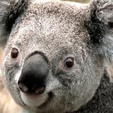 landonking24 avatar