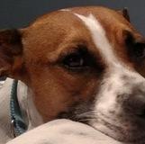 ajthedoge avatar