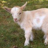 GoatGamerHUN avatar