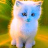 Chocuelo avatar