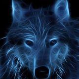 goldbunny avatar