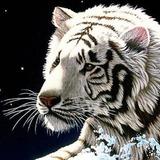 Fox_Lover avatar