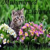 ElAhmer avatar