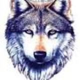 carlosjose avatar